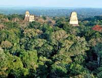 Pic 2: 'Middle America swarms with lost cities': the view from Tikal Temple IV of Temples I and II