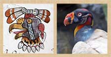 """Pic 11: '""""The vulture nahuales are very wise, and they are very brave""""'"""