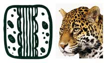 Pic 4: Maya glyph for book, with jaguar spots clearly depicted (L) and a jaguar's head