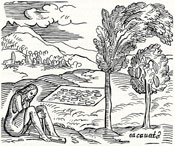 Pic 4: Engraving of the chocolate tree by Girolamo Bezoni ('La Historia del Mondo' 1565)