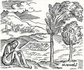 Pic 4: Engraving of the chocolate tree by Girolamo Bezoni ('La Historia del Mondo' 1565)