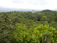 Pic 9: View of Tikal temples I, II & III, from the top of Temple IV. This is the view from the Great Temple on Yavin 4 (the rebel base), where the Royal Award Ceremony took place at the end of Episode IV, the first Star Wars movie to be released