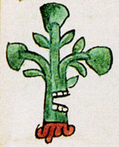 Pic 3: The toponym (place glyph) for Ahuacatlan, Codex Mendoza for. 39r (detail)