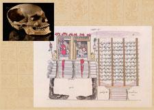 Fig 6: Cráneo con perforaciones laterales que servían para atravesarle una viga de madera y exhibirlos en el tzompantli (arriba); representación del Templo Mayor de Tenochtitlan y el Huei Tzompantli, Códice Durán(1990: t