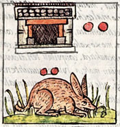 Pic 10: The day 2 Rabbit, Florentine Codex Book 4, chapters 4-5
