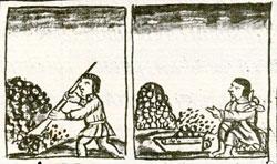 Pic 3: 'Tezontlalli' - Florentine Codex, Book 11