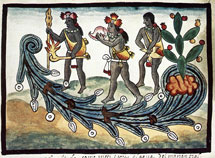 Pic 3: A conch blower in a water ritual; from the 'Tovar Manuscript'