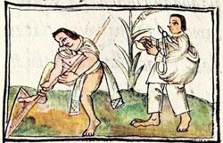 Pic 2: 'The good farmer', Florentine Codex, Book 10