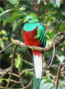 """Pic 3: A quetzal bird guides the singer to the """"land of flowers"""" in the 'Cantares Mexicanos'"""