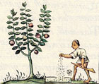 Pic 10: Aztec farmers planting trees; Florentine Codex Book XI