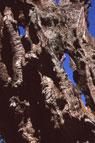 Pic 12: Trees growing today near Tzintzuntzan, Michoacan