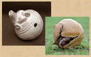 Pic 12: 4-hole armadillo-shaped ocarina, University of Calgary collections, alongside a rolled-up three-banded armadillo