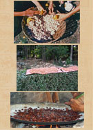 Pic 7: Removing the seeds and pulp from a cacao pod (top); drying the fermented cacao seeds (middle); roasting the cacao seeds (bottom)