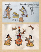 Pic 9: Examples of excessive drinking in Aztec times, with the 'pulque-enhancer' root clearly visible; Codex Mendoza, fol. 70r, detail (top), Codex Tudela, fol. 70, detail (bottom)