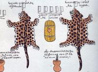 Pic 5: 40 jaguar pelts sent as annual tribute to Tenochtitlan from the province of Xoconochco. Codex Mendoza fol. 47r (detail)