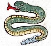 Pic 10: Rattlesnake, Codex Magliabecchiano, fol. 11 (detail)