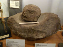 Pic 2: Neolithic saddle quern from Windmill Hill, Wiltshire in Avebury Museum