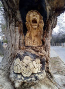 Pic 8: La Llorona carved into the trunk of a tree in Arteaga, Coahuila