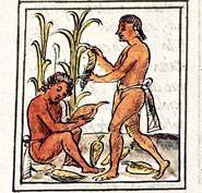 Pic 4: Mexica farmers harvesting maize; Florentine Codex Book IV