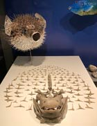 Pic 9: Puffer fish offering, Templo Mayor Museum, Mexico City