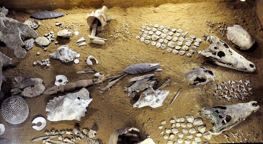 Mayan Animal Sacrifice